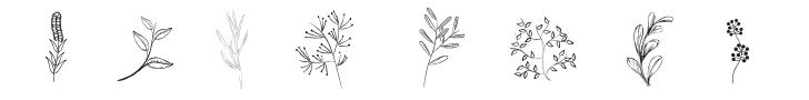 plantes, fleurs, feuilles, diversité et beauté de la nature